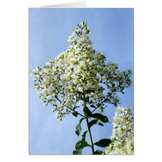 Pretty White Crepe Myrtle Blossoms Card