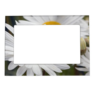 Pretty White Daisies Picture Frame Magnets
