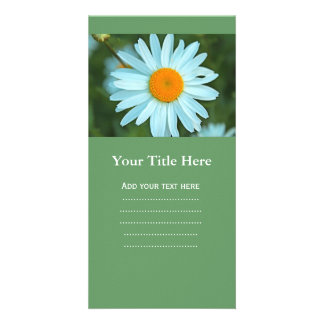 pretty white daisy flowers picture. card