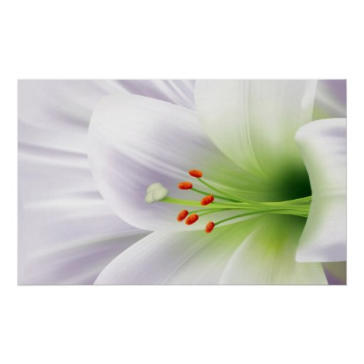 Pretty White Easter Lily Print
