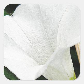 Pretty white hoist bloom square sticker