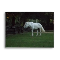 Pretty White  Horse Envelope