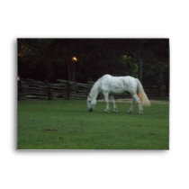Pretty White Horse Grazing Envelope