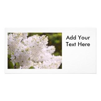 Pretty White Lilacs Photo Photo Cards