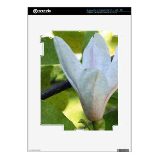 Pretty white magnolia flower and its green leaves iPad 3 skins