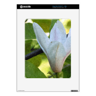 Pretty white magnolia flower and its green leaves skin for the iPad