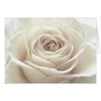 Pretty White Rose Card