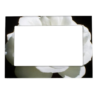 Pretty White Rose Magnetic Photo Frame