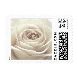 Pretty White Rose Stamp