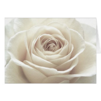Pretty White Rose Stationery Note Card