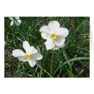 Pretty White Spring Flowers CricketDiane Card