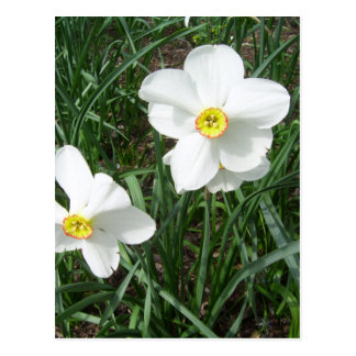 Pretty White Spring Flowers CricketDiane Postcard