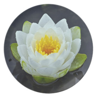 Pretty white waterlily plate