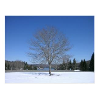 Pretty Winter Tree
