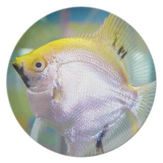Pretty Yellow and White Fish Melamine Plate