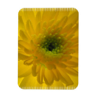 Pretty Yellow Chrysanthemum Rectangle Magnets
