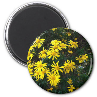 Pretty Yellow Daises Magnet
