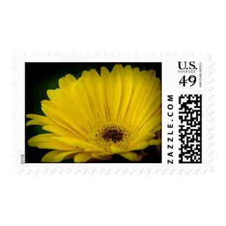 Pretty Yellow Daisy Dark Edge Postage