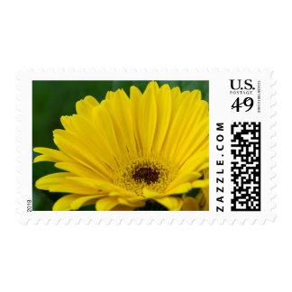 Pretty Yellow Daisy Postage