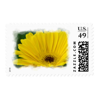 Pretty Yellow Daisy White Edge Postage