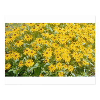 Pretty Yellow Flowers  Design Products Postcard