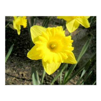 Pretty Yellow Flowers Postcard