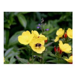 Pretty Yellow Pansies Postcard