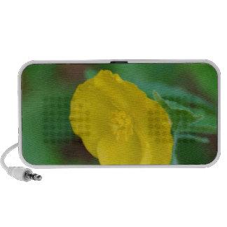 Pretty Yellow Poppy Notebook Speakers