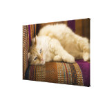 Pretty yellow tabi cat laying on couch. gallery wrapped canvas