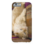 Pretty yellow tabi cat laying on couch. barely there iPhone 6 case