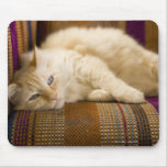 Pretty yellow tabi cat laying on couch. mouse pad