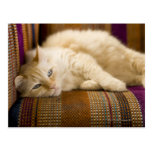 Pretty yellow tabi cat laying on couch. postcard