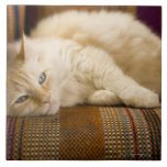 Pretty yellow tabi cat laying on couch. tiles