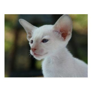 Pretty Young White Kitty Cat Postcard