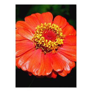 Pretty Zinnia Flower Card