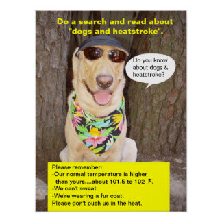 Prevención de la insolación póster