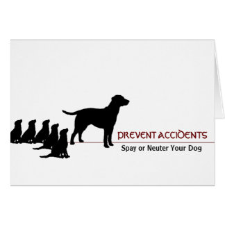 """""""Prevent Accidents"""" (dogs) Cards"""