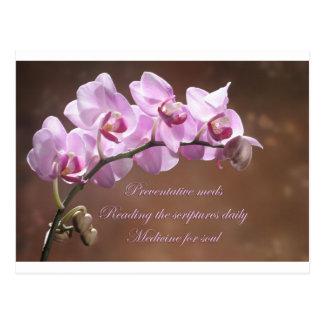 Preventative Meds Orchid Postcard