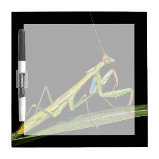 Preying mantis, Odzala, Kokoua National Park Dry-Erase Board