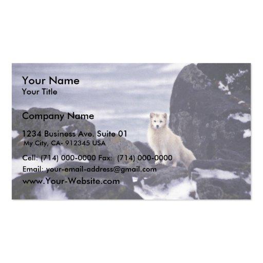 Pribilof Island Oil Spill, M/V Citrus 1996 Arctic Business Cards