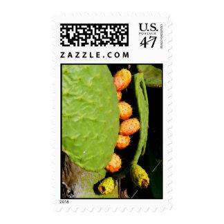 Prickley Pear Cacti Fruit Postage
