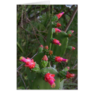 Prickley Pear Cactus Blossoms Card