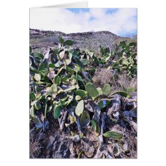 Prickley Pear Cactus Card