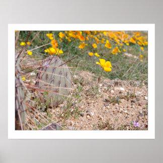 Prickley Pear Cactus & Poppy Poster