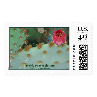 Prickley Pear in Blossom Postage Stamp