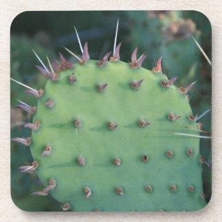 Prickley Pear Pad Coaster