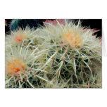 Prickly Barrel Cactus Greeting Card