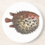 Prickly Bottle Fish Beverage Coaster