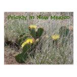 yellow, cactus, new, mexico, flower