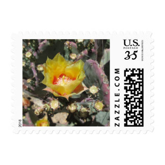Prickly Pear Black Spined Postage Stamp